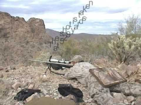 Arizona Desert Bighorn Sheep Hunting – Arizona Guided Hunts