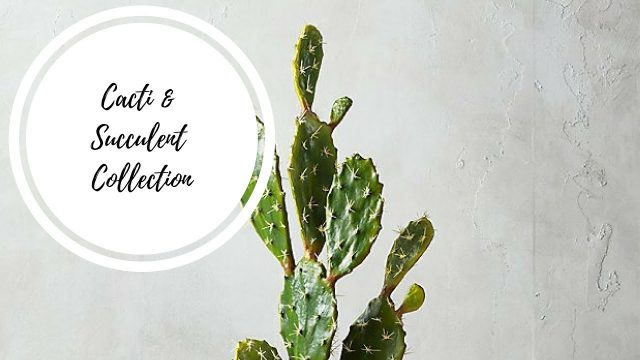 Cacti & Succulent Collection | Desert Houseplant tour