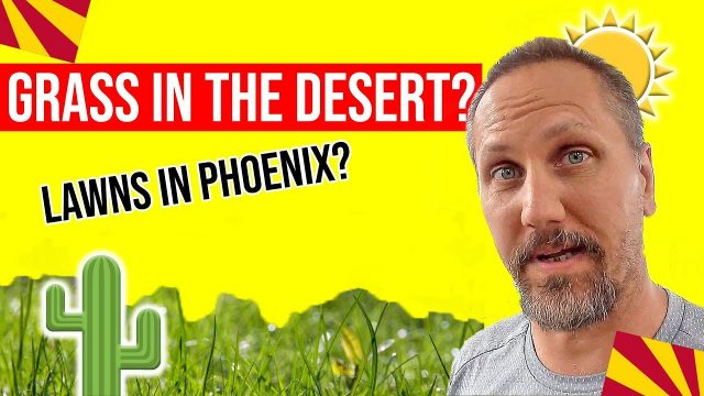 Arizona Desert: Growing Grass While Living in the Desert? | Moving / Living in Phoenix, Arizona
