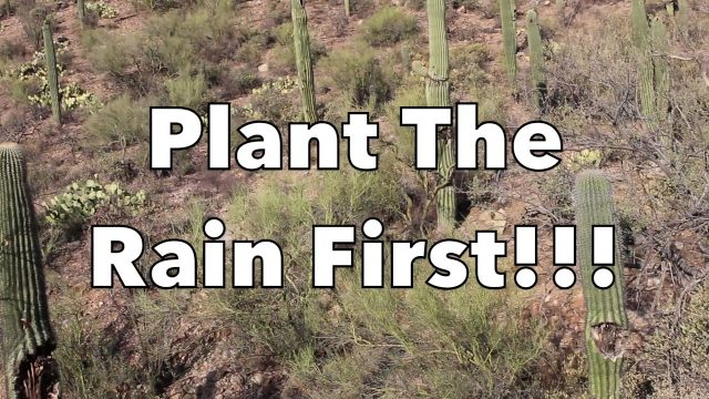 The Permaculture Classroom: Sonoran Desert Food Forest Theory