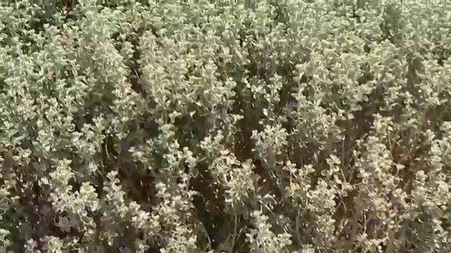 Star Nursery Dr Q Drought Tolerant Plants