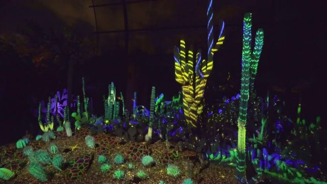 Experience Electric Desert at Desert Botanical Garden