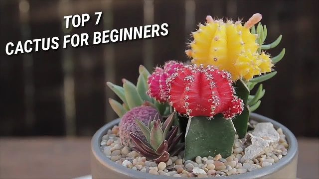7 Cactus For Beginners