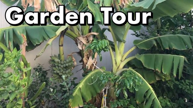 One Arizona Garden | Garden Tour  6.7.2017