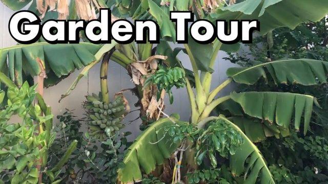 One Arizona Garden | Garden Tour  6.7.2017