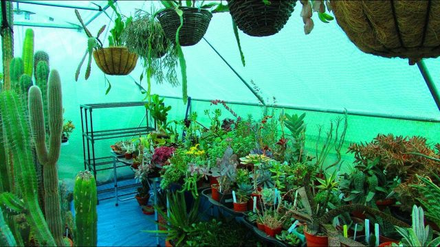 New Succulent Plant Stand in the Polytunnel & update on watering the Cactus Hanging Baskets – VLOG