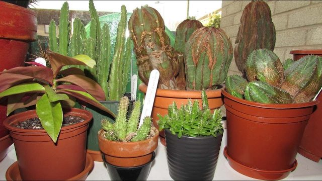 Our Indoor Cacti & Succulent & Houseplant collection March Update Part 1