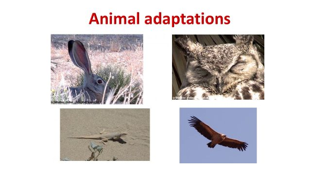 Mojave Desert – Plant and Animal Adaptations