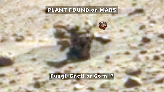 👽 PLANT FOUND on MARS – Fungi, Cacti or Coral ? ArtAlienTV
