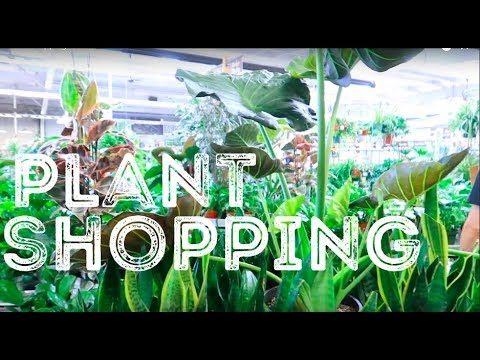 Plant Shopping in ARIZONA