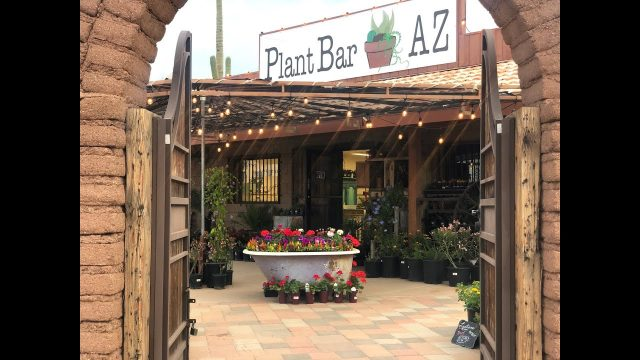 Tour of Plant Bar AZ!