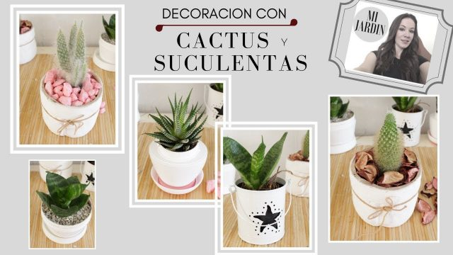 DECORACION CON CACTUS Y SUCULENTAS /IDEAS Y TIPS..!!