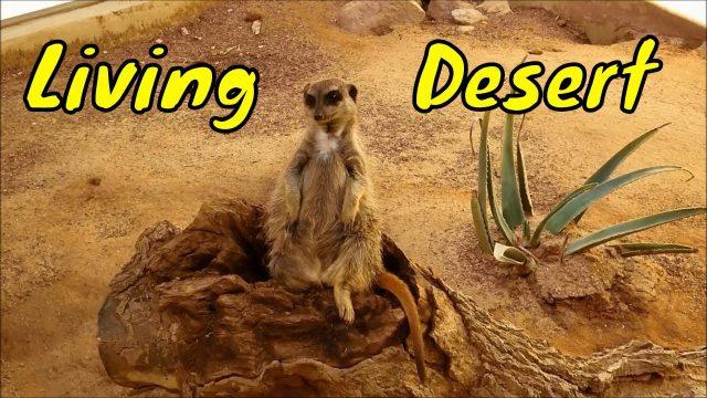 """""""Mr. Hino's Trip To The Living Desert (Palm Desert)"""
