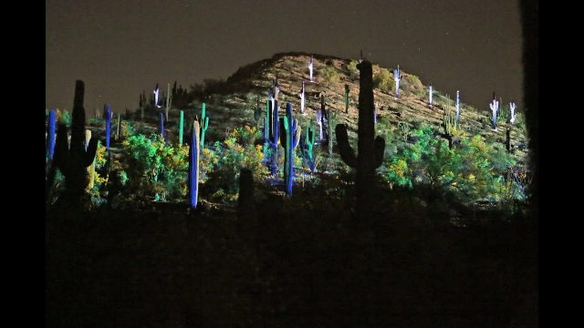 2019  Electric Desert at Desert Botanical Garden in Phoenix, Arizona