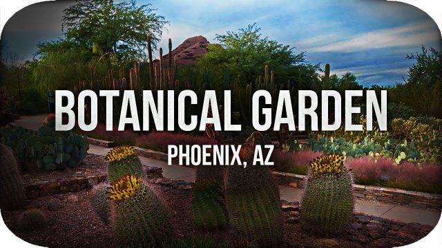 Desert Botanical Garden! (Phoenix Day 3)