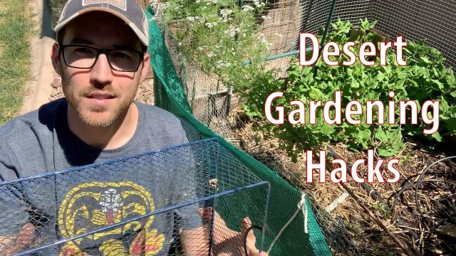 Desert Gardening Hacks for Spring and Summer Seasons