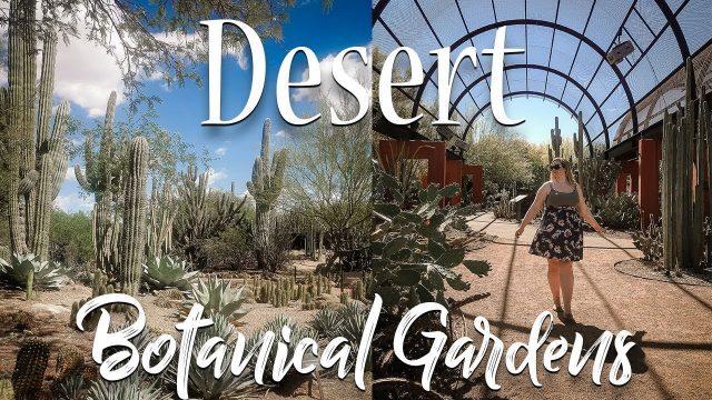 Desert Botanical Gardens || Phoenix, AZ