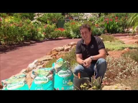 Growing Cacti & Succulents at home using Osmocote Professional Cacti & Succulents Mix