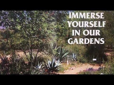 Gorgeous Desert  Garden Tours at Pima Master Gardens Extension Garden Center