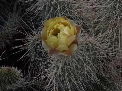 Phoenix (Arizona) Desert Botanical Garden – March 2017