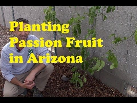 Planting Passion Fruit in Arizona