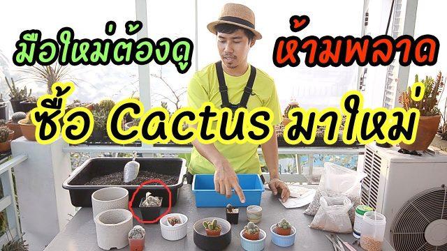 มือใหม่ต้องดู ซื้อ Cactus มาใหม่ เพราะอะไร ต้องเปลี่ยนดิน ( ไม่เปลี่ยน ไม่รู้ปัญหา )