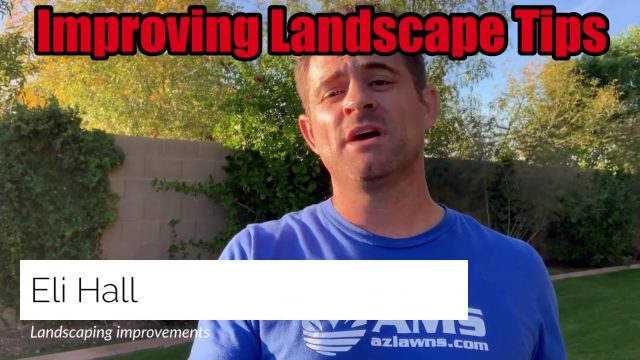 5 Tips to Improve Your Landscape in Phoenix