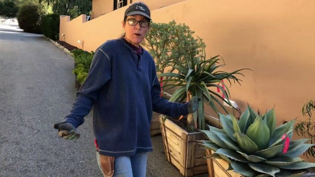 Pasadena Historic Home Succulent Garden Installation Day 1 (Tips on Barrel Cactus and Plant Haul)