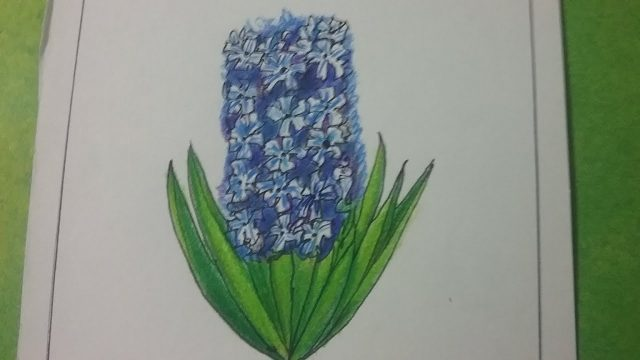 How to draw desert plant hyacinth, step by step drawing for kids, easy drawing with basic shapes