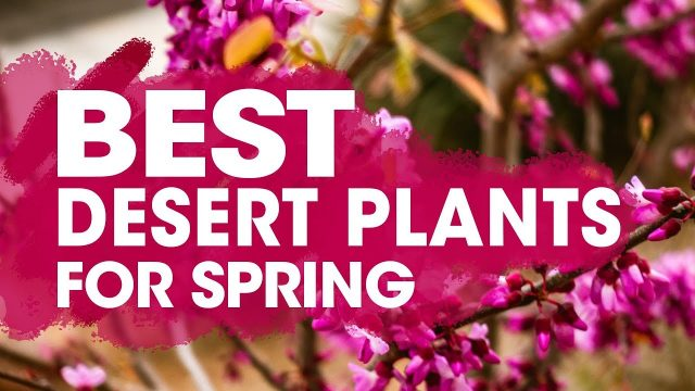 Best Desert Plants for Drought Tolerant & Heat Resistant Spring Planting
