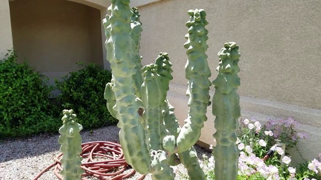 Easy Care Desert Landscaping I Outdoor Edition I Virescent