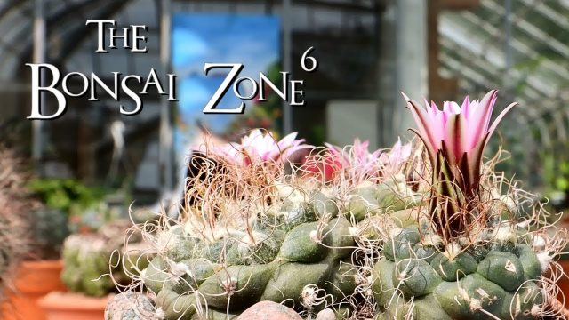 The Toronto Cactus and Succulent Show, The Bonsai Zone, June 2019