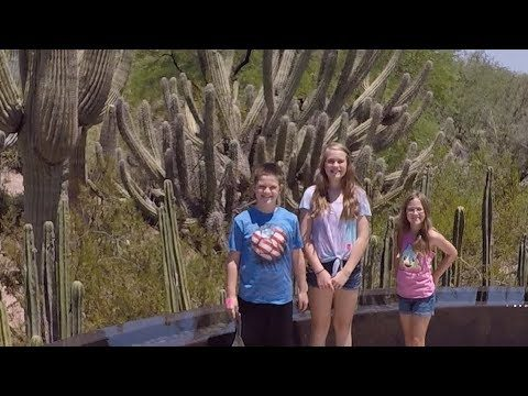 Desert Botanical Gardens (Phoenix): Complete Tour