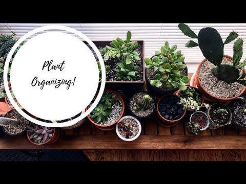 Rearranging my Desert plant bench | Organizing!