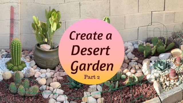 Creating a Mini DESERT GARDEN   Cactus Garden (Part 2)