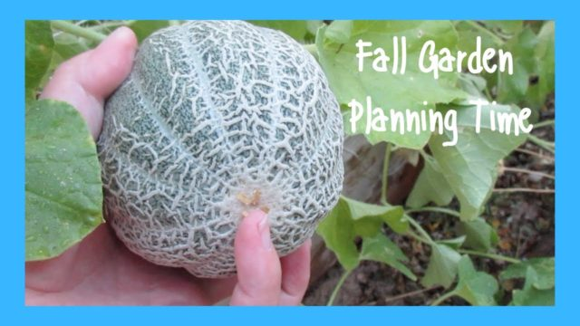 Low Desert Fall Garden Planning AZ Desert Garden Wk 19