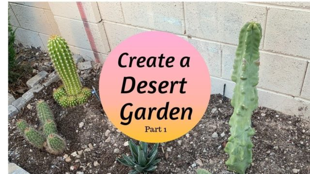 Creating a Mini DESERT GARDEN | Cactus Garden (Part 1)