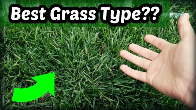 Is Tall Fescue The Best Cool Season Grass Type?