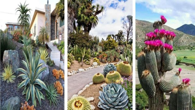 20+Stunning Cactus Landscaping Ideas For Beautiful Yard