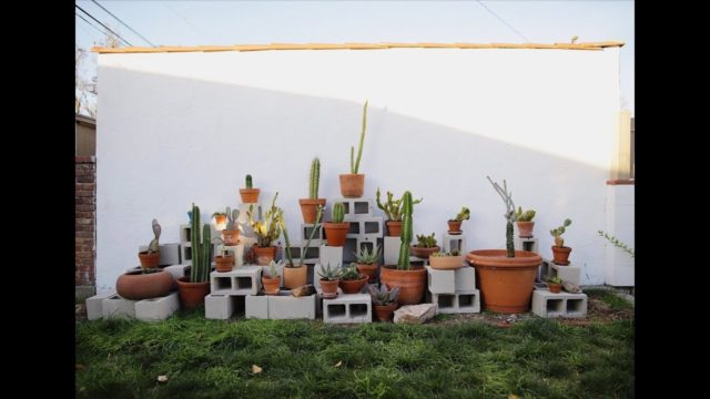 Cactus Wall – DIY Landscaping | Backyard Design | Cactus Landscaping | Low Cost Ideas