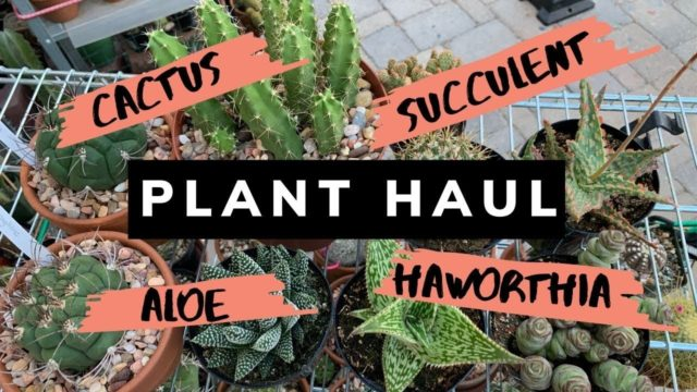 Cactus and Succulent Plant Haul (July 2019) | Cactus Collection