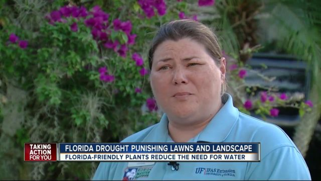 Florida drought punishing lawns and landscape