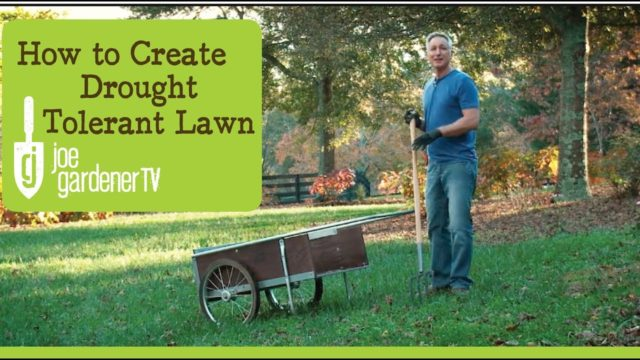 How to Create a Drought-Tolerant Lawn