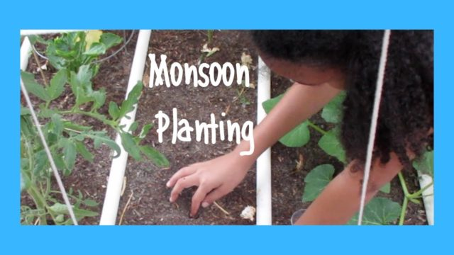 Planting seeds for Monsoon season in our AZ Desert Garden Wk 16