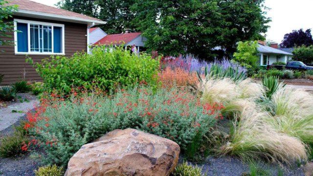 50+Drought Tolerant Landscaping Ideas| Garden Ideas