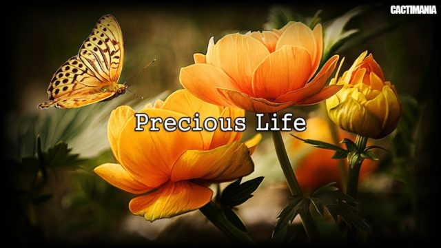 Precious Life – World Environment Day – For Carl (The Desert Plant Diary)