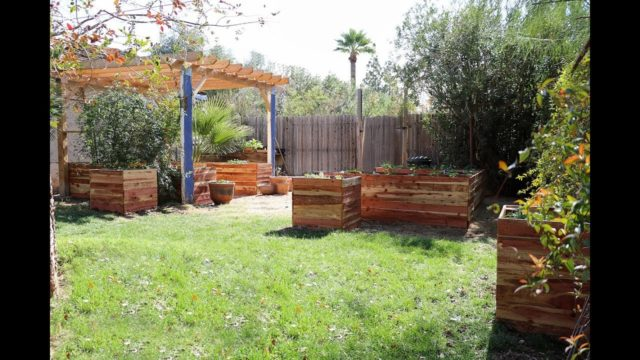 My Raised Bed and Grow Bag Garden in Phoenix, Arizona – February 16th 2018