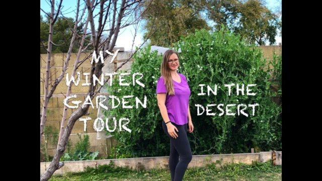 MY WINTER GARDEN TOUR 2019 Phoenix