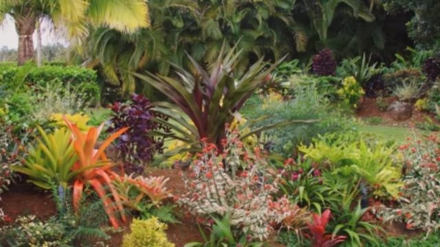 How to Create a Tropical Garden | Mitre 10 Easy As Garden