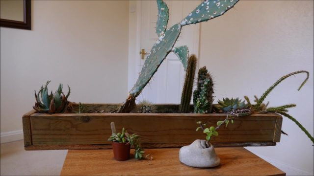 Cacti Trough Mealy Bug Disaster